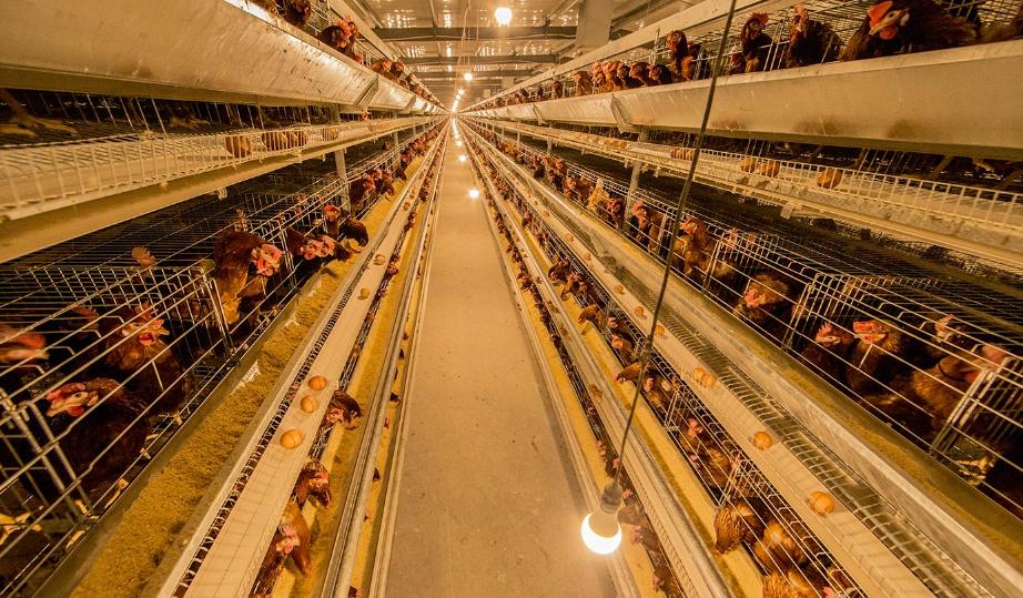 管家婆软件家禽养殖生产企业方案:管家婆工贸PRO